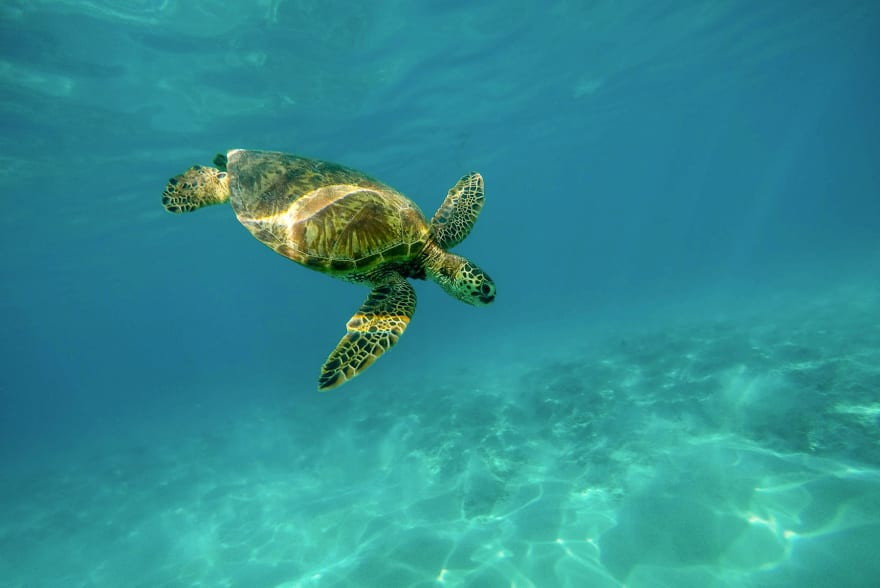 Underwater turtle diving